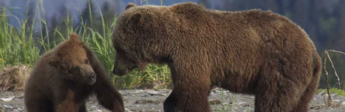 Bear Viewing in Alaska Cover Image
